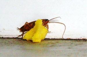 Мелок Машенька от насекомых