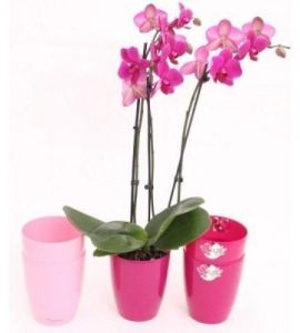 Вазон Орхидея, Ø12,5см