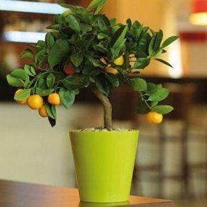 Горшок для цветов Вулкано, Ø11см, V0,7 л
