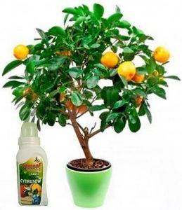 Удобрение для цитросовых с витамином С