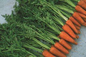 Морковь Шантане, 2 гр