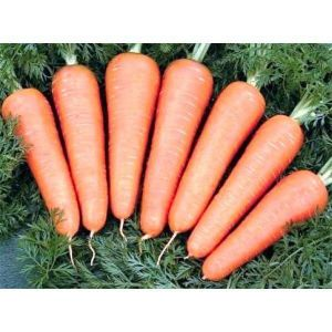Морковь Королева Осени, профупаковка