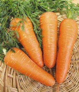 Морковь Шантане, поздняя, 3 гр