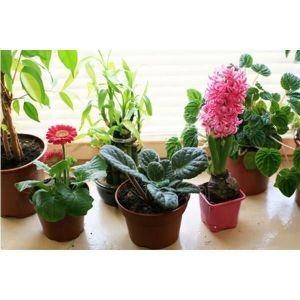 Удобрение для цветущих растений 500 мл