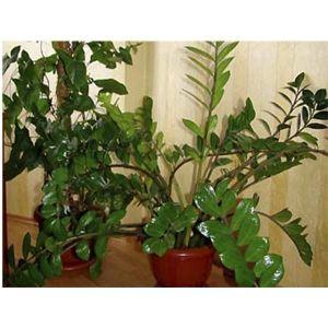 Идеальный Блеск для ухода за комнатными растениями