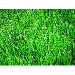Газонная трава WATERLESS