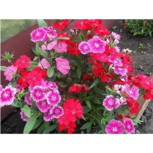 Удобрение Biopon для садовых цветов