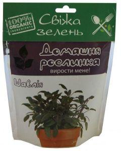 Домашнее растение - Шалфей