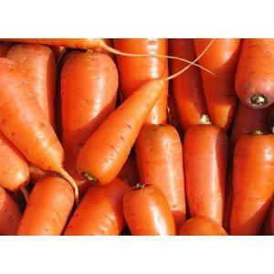 Морковь Каротель, 2 гр