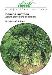 Сельдерей листовой Вестерленд