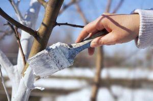 Краска для защиты деревьев