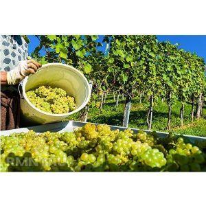 Удобрение для винограда Агроном Профи