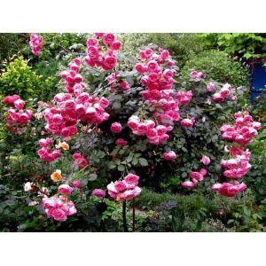 Удобрение Biopon для роз