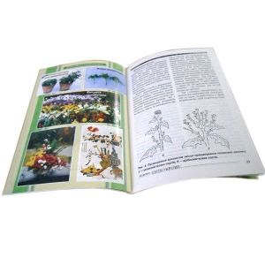 Книга Хризантеми
