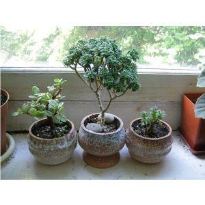 Грунт Квитка для кактусов (2,5 литра)