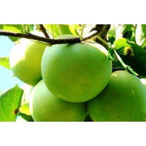 Яблоня Мутсу, зимняя