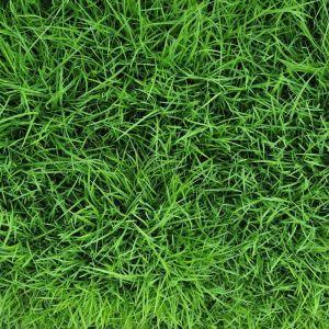 Трава Спорт-игра 1 кг