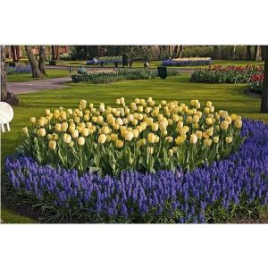 Тюльпан Ivory Floradale (Айвори Флорадейл)