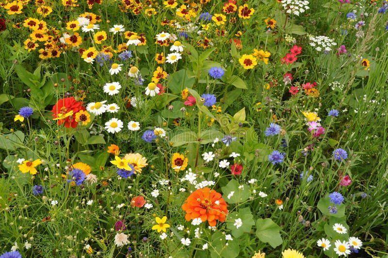поле луг трава цветы растения HD обои для ноутбука | 531x800