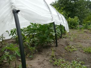 Агроволокно белое, плотность 60г/м², ширина 3,2 м