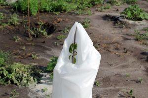 Агроволокно белое, плотность 60г/м², ширина 1,6 м