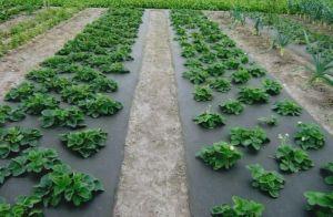 Агроволокно черное (мульча), плотность 60г/м², рулон 3,2мх100м