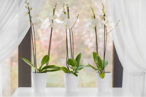 Вазон TWIN орхидея белый 1,3 л