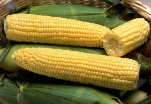 Кукуруза Сахарная 2019