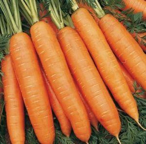 Морковь Карлена, 2 г 2019