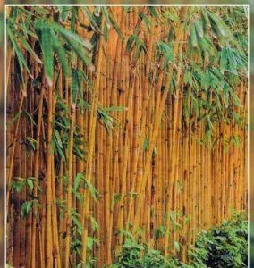 Бамбуковая опора 60 см