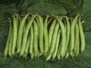 Фасоль овощная спаржевая Палома