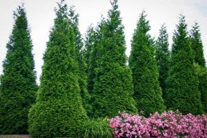 Грунт Экофлора для хвойных растений 40 л