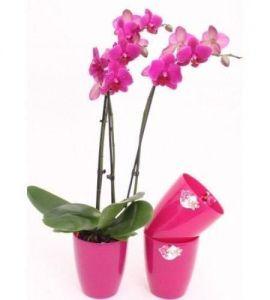 Вазон Орхидея, Ø14см