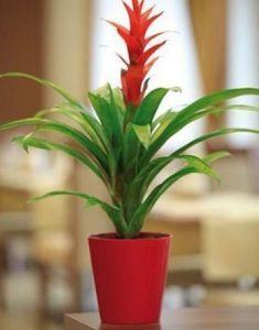 Горшок для цветов Вулкано, Ø13см, V1,1 л
