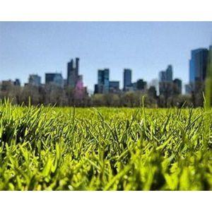 Газонная трава Sunshine