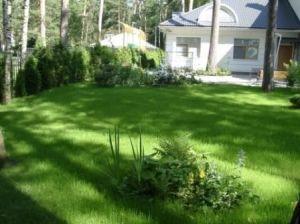 Газонная трава Дюймовочка