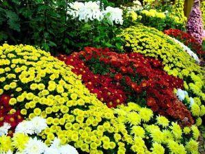 Удобрение для цветов NPK+микроэлементы