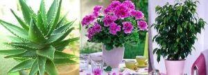 Удобрение для комнатных цветов Нутрифлекс F