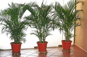 Удобрение для пальм Скоттс Эверис