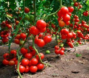 Удобрение для увеличения урожая Кода Комплекс