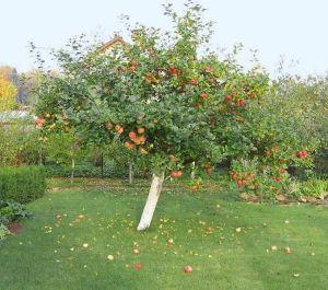 Удобрение для сада Террафлекс