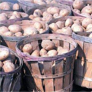 Фертика Картофельное-5