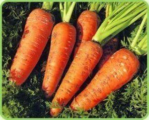 Морковь Красавка
