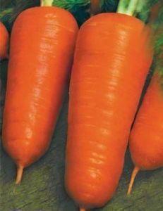Морковь Шантане, 20 г
