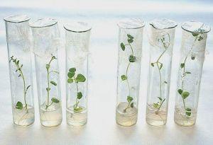 Укоренитель для растений Гилея