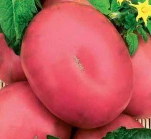 Томат Линда розовый