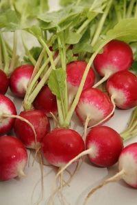 Редис красный с белым кончиком 20 гр