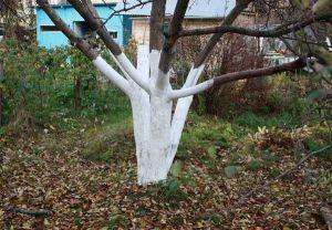 Краска для защиты деревьев Посад 14 кг