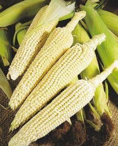 Кукуруза Попкорн Оскар