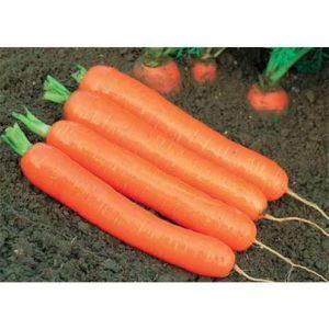 Морковь Байон F1